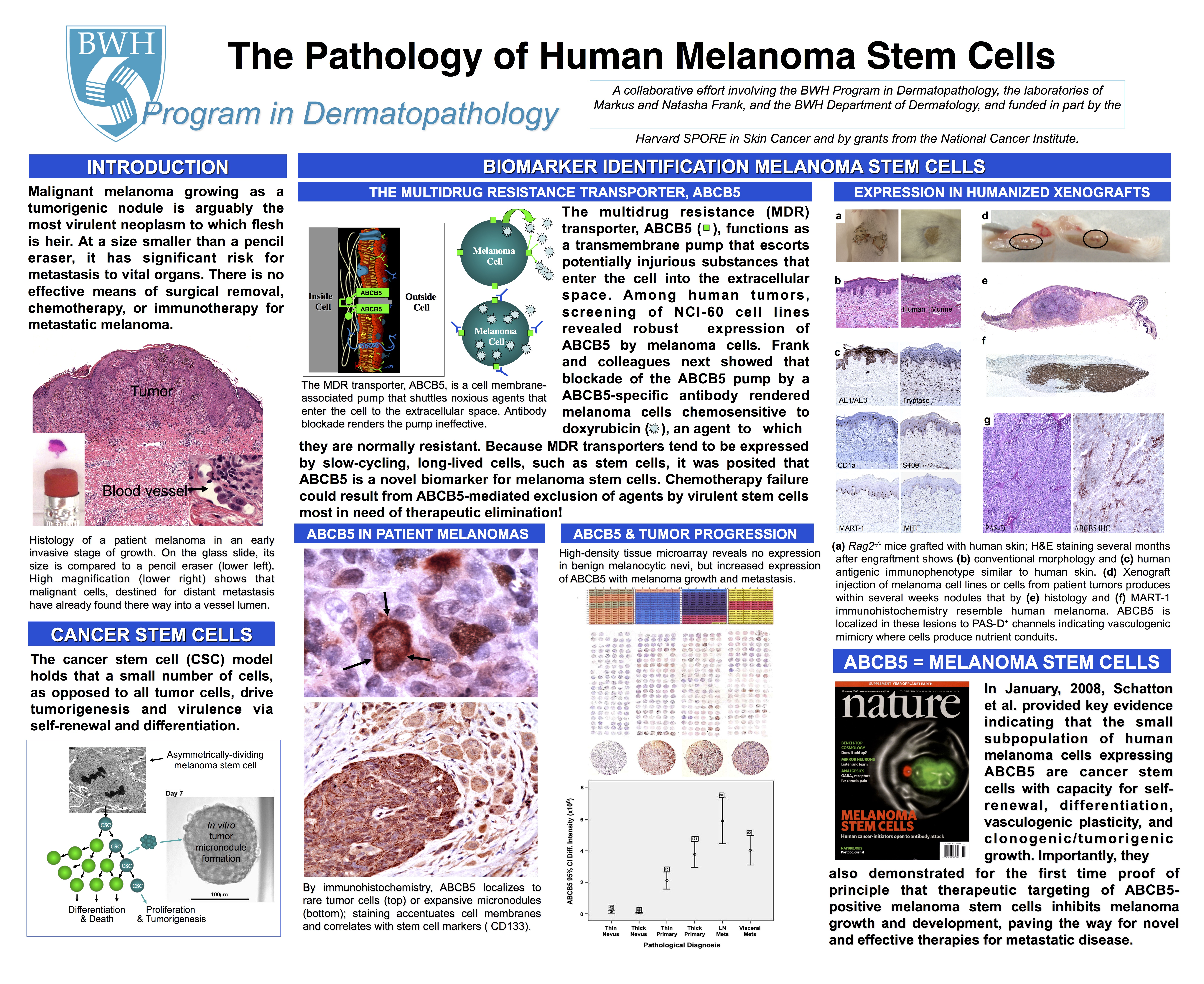 Stem Cell Poster 1 final